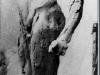 014 Studiu anatomic. Anatomy study 1902