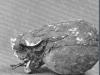 059 Capul lui Narcis. Head of Narcissus. 1909