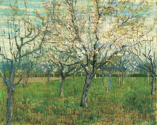 1888 Abricotiers en fleurs