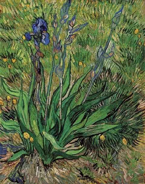 1889 Les iris 1