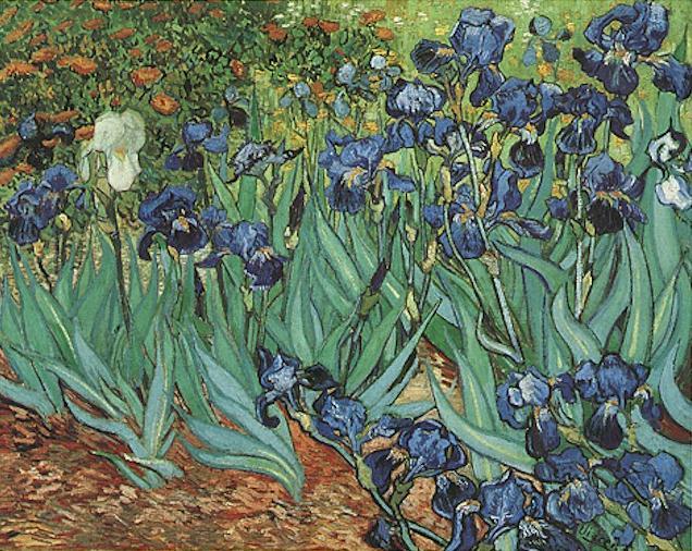 1889 Les iris 2