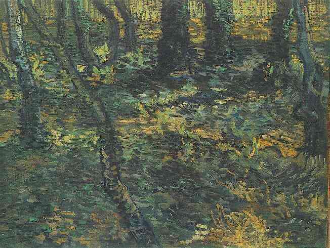 1889 Lierre en sous-bois
