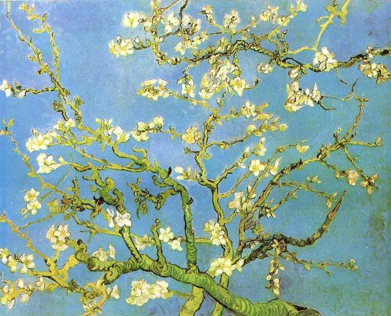 Blossomong Almond Tree