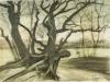 1882 Etude d'un arbre