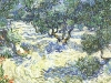 1889 Plantation d'oliviers 3