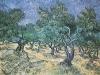 1889 Plantation d'oliviers 2
