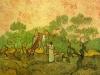 1889 Ramassage des olives