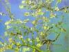 1890 Branches d'amandier en fleurs