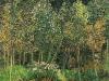 1890 Le bois