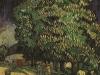 1890 Marronnier en fleur 2