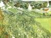 1890 Vignes avec vue sur Auvers