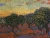 Olive Grove - Orange Sky