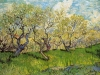 Orchard in Blossom 4