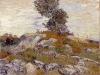 Rocks with Oak Tree