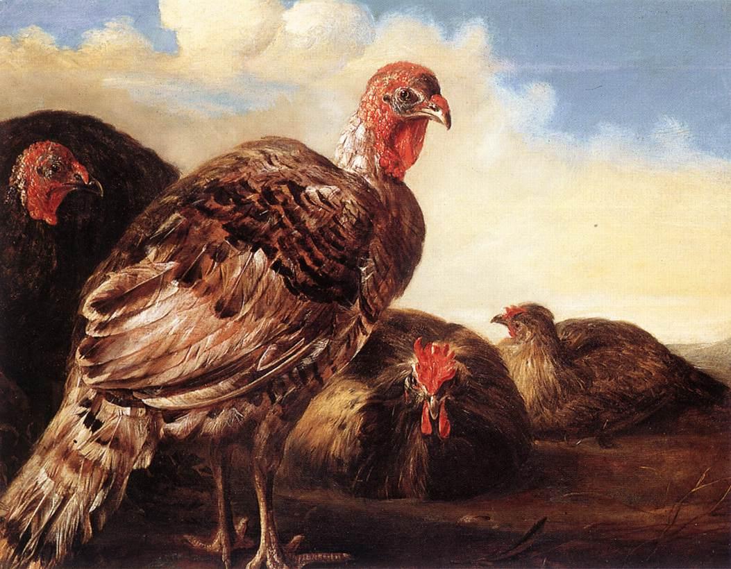 domestic-fowl