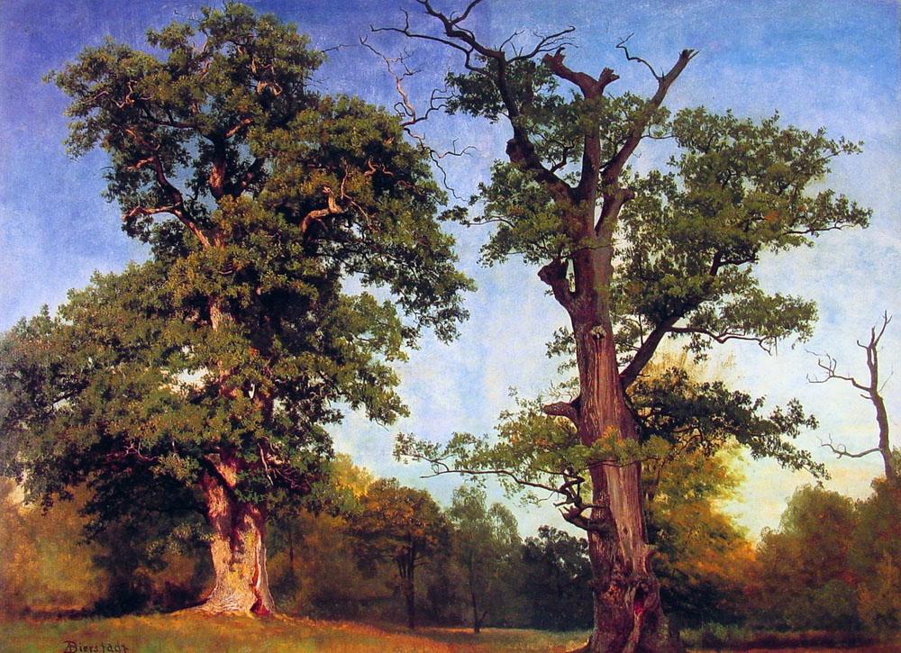 pioneers-of-the-woods