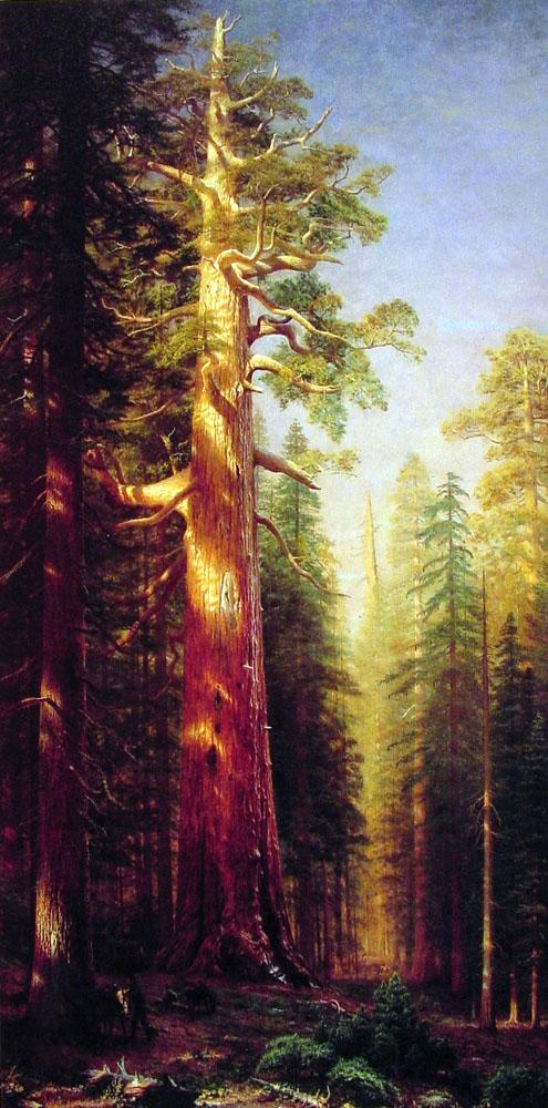 the-great-trees-mariposa-grove-california