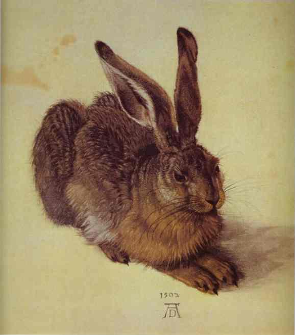 Albrecht Durer - A Young Hare