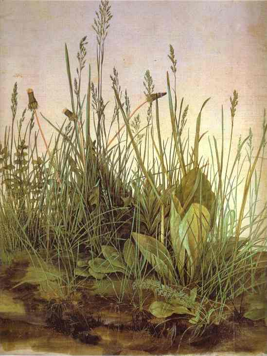 Albrecht Durer - The Large Turf