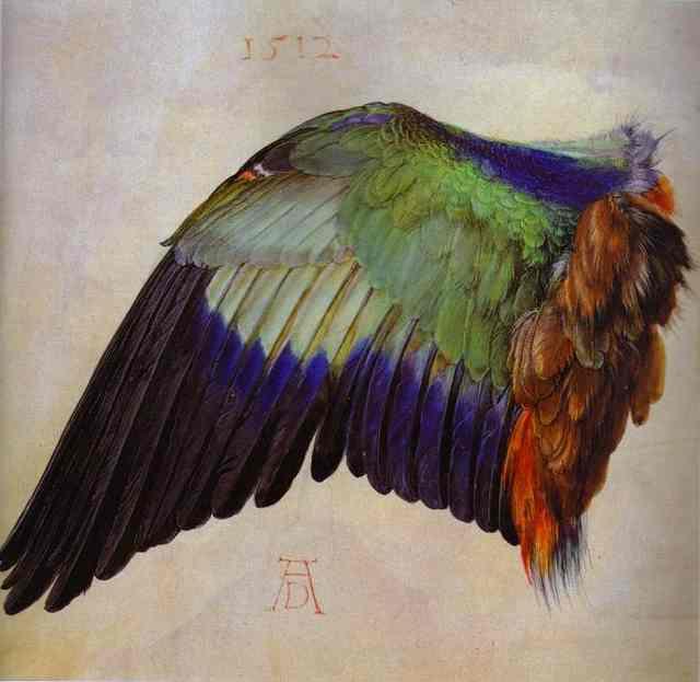 Albrecht Durer - Wing of a Roller