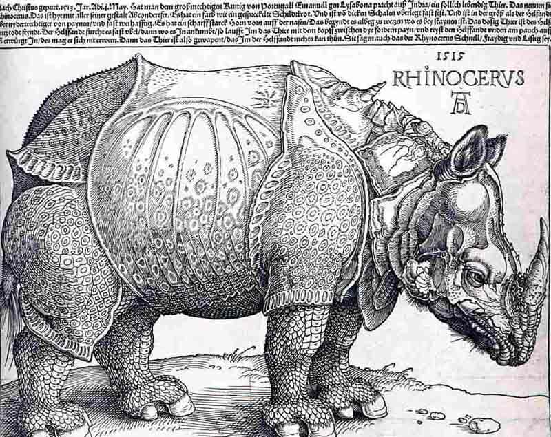 Durer,15,germany,rhinoceros,berlin Smpk