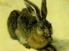 A_Young_Hare_1502
