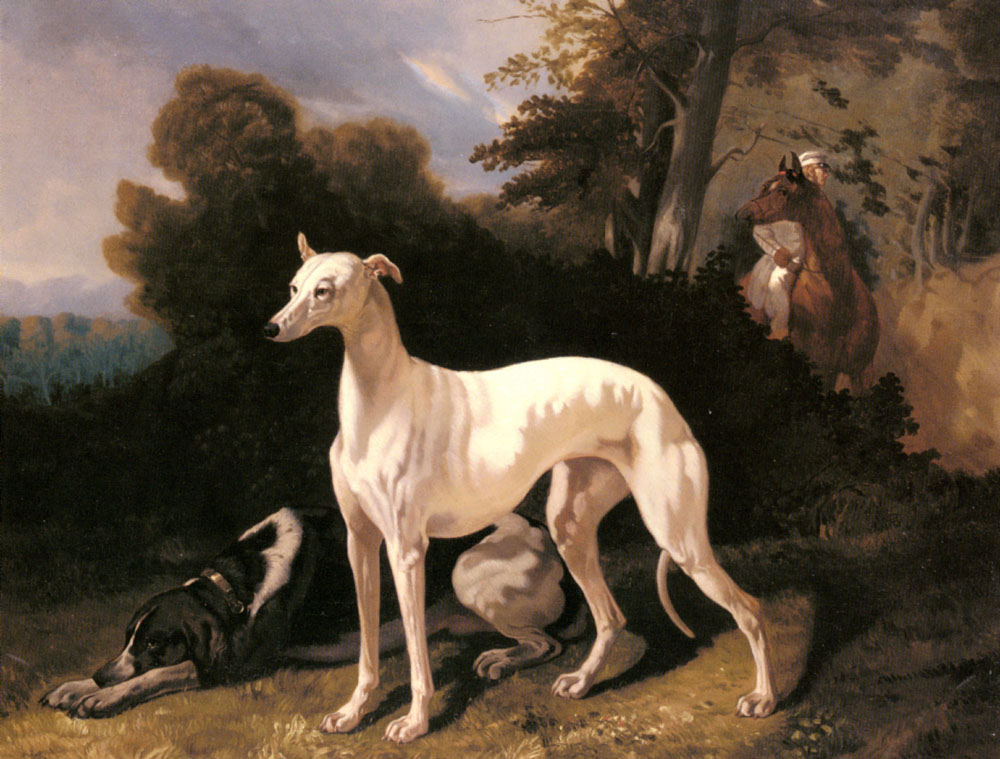 A Greyhound In An Extensive Landscape