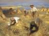 harvesting-the-sheaves