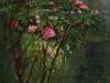 rose-bush-in-flower