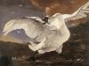 the-threatened-swan