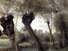saint-nicholas-les-arras-willows-on-the-banks-of-the-scarpe