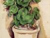 a-pot-of-geraniums