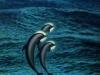 saint-dolphins